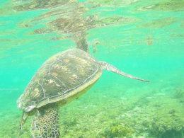Apo Island Negros