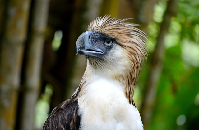 Mighty Birds of Philippine Eagle Center - iWander