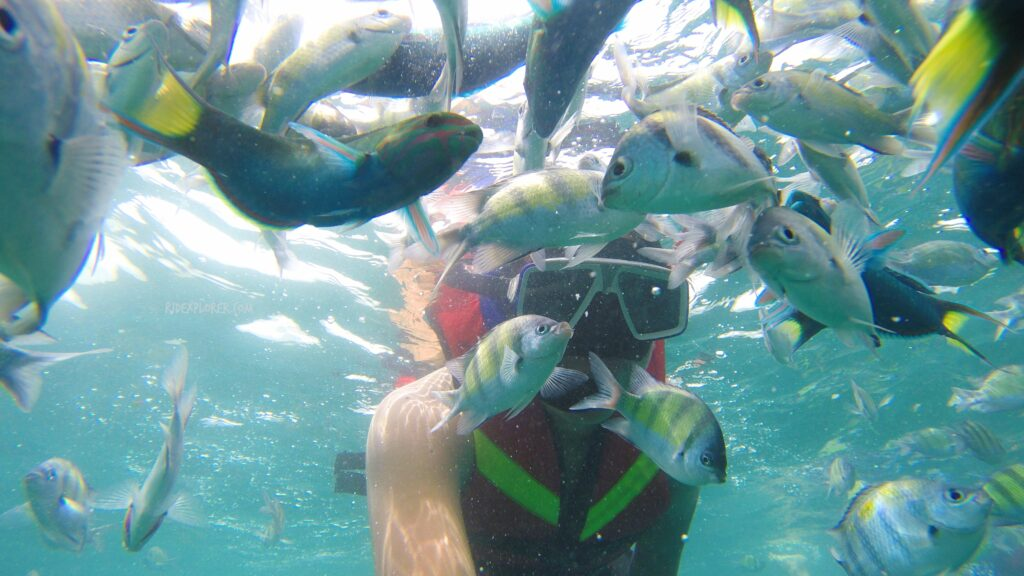 snorkeling in 3 khai islands phuket thailand
