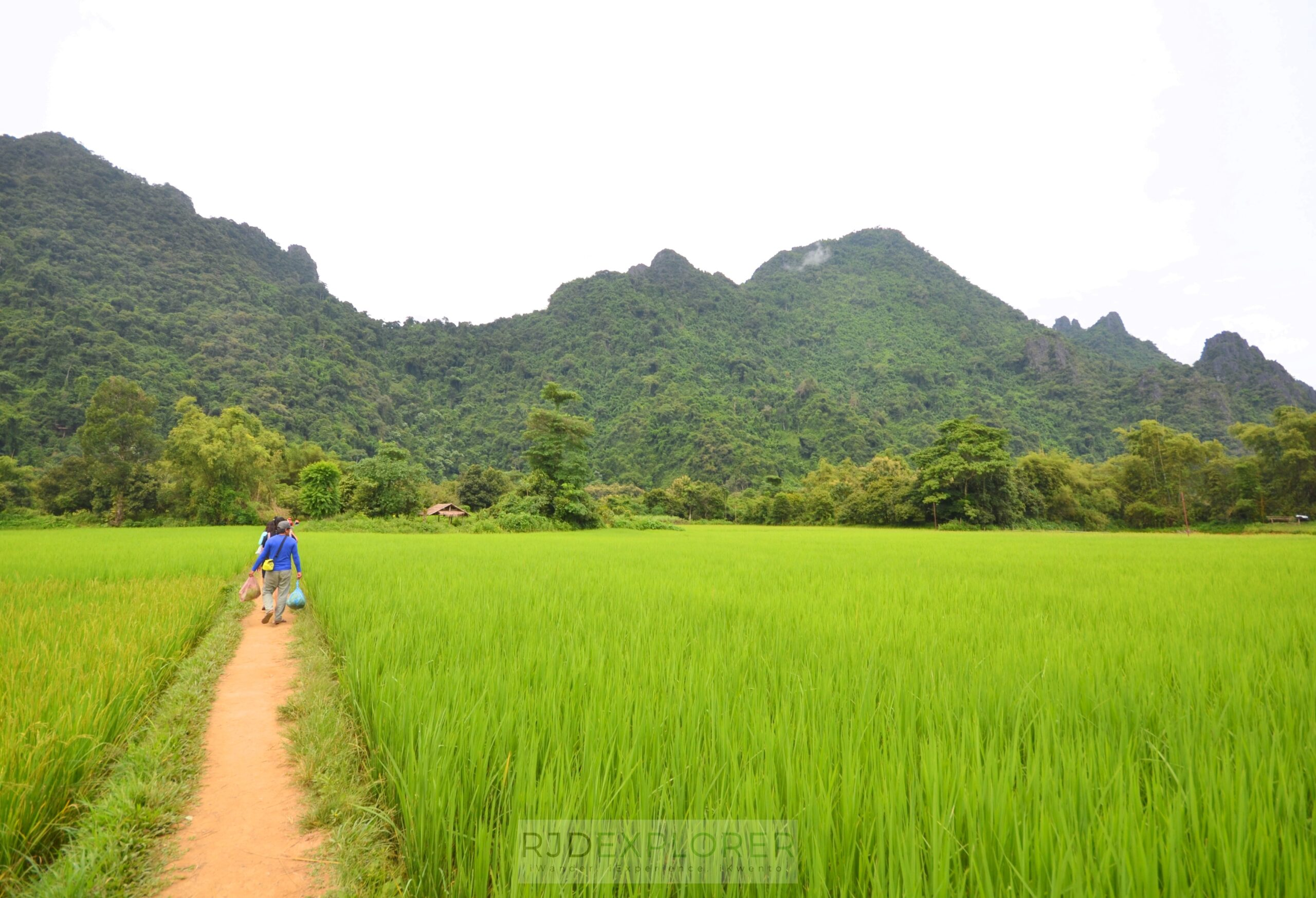 laos itinerary diy vang vieng rice fields and karst mountains